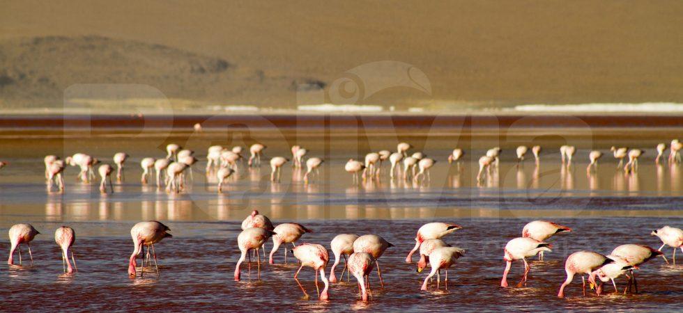 Laguna Colorada, Reserva Eduardo Avaroa